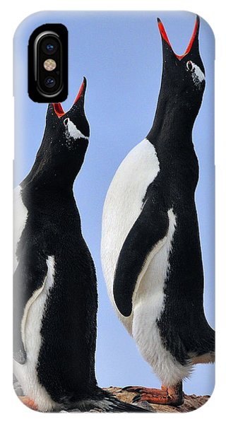 Gentoo Love Song IPhone Case