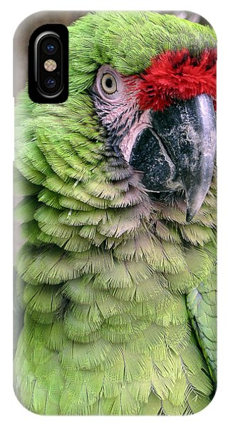 George The Parrot IPhone Case