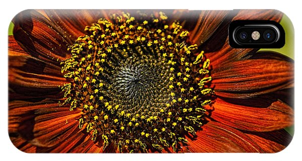 Gerber Daisy Full On IPhone Case