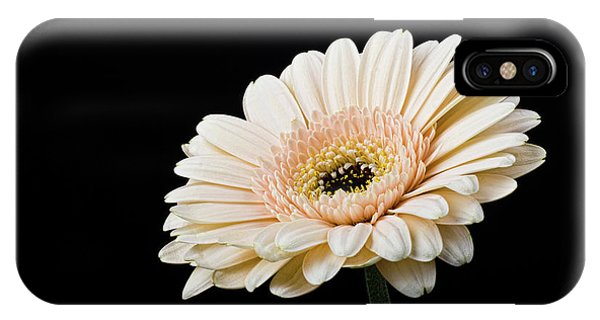 IPhone Case featuring the photograph Gerbera Daisy On Black II by Clare Bambers