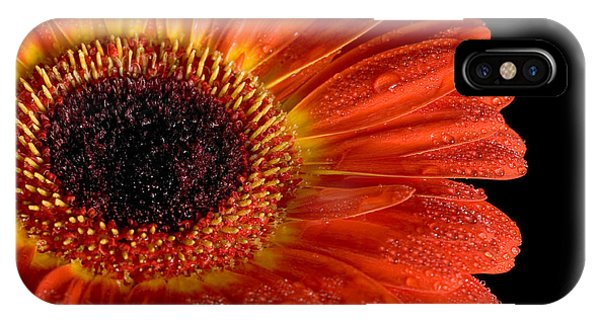 Gerbera I IPhone Case