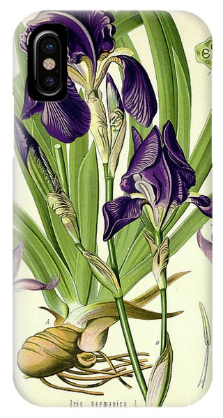 Flora iPhone Case - German Iris by German School