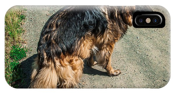 German Shepherd On Trail IPhone Case
