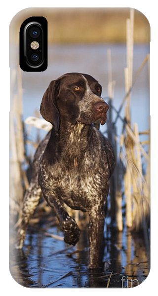German Shorthair On Point -  D000897 IPhone Case