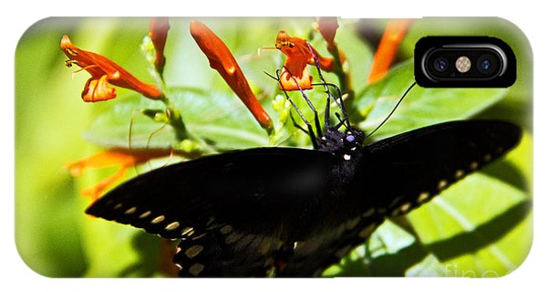 iPhone Case - Getting The Nectar by Kelly Holm