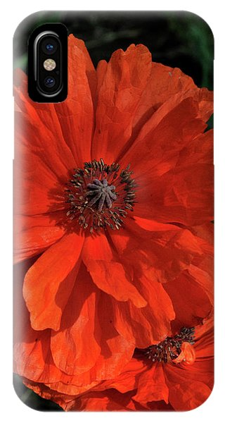 Giant Mountain Poppy IPhone Case