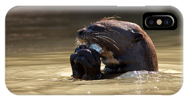 Giant Otter Eating Fish IPhone Case
