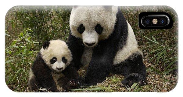The Nature Center iPhone Case - Giant Panda Ailuropoda Melanoleuca by Katherine Feng