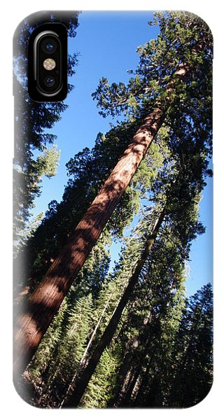Giant Redwood Trees IPhone Case