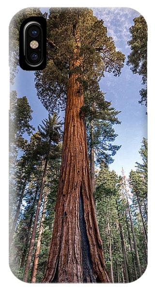 Giant Sequoia IPhone Case