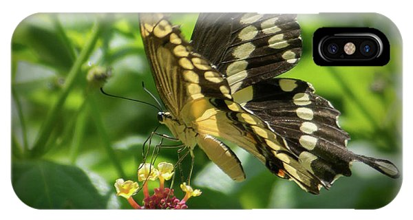 Giant Swallowtail On Lantana IPhone Case