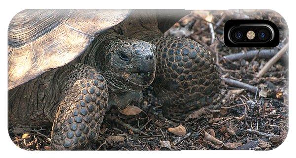 Giant Tortoise At Urbina Bay On Isabela Island  Galapagos Islands IPhone Case