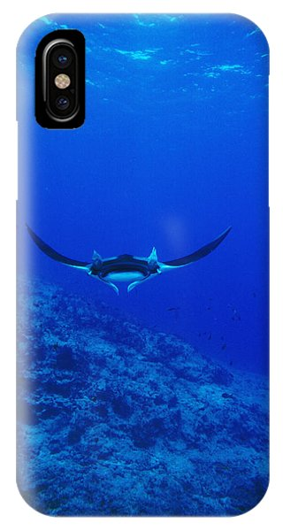 Sea Floor iPhone Case - Gianta Pacific Manta Ray Swimming by James Forte