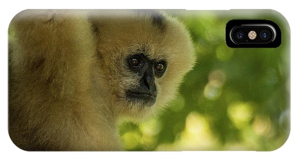 Gibbon Portrait IPhone Case