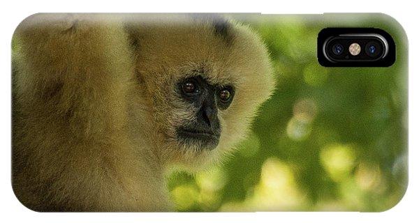 Gibbon Portrait IPhone Case