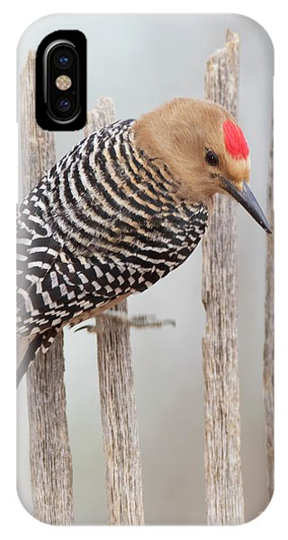 Gila Woodpecker IPhone Case