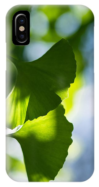 Gingko Leaves In The Sun IPhone Case