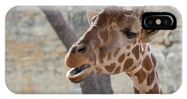 Girafe Head About To Grab Food IPhone Case