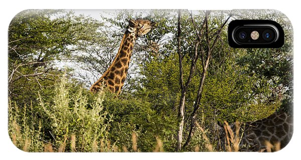 Giraffe Browsing IPhone Case