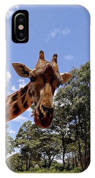 Giraffe Getting Personal 4 IPhone Case