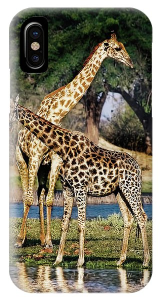 Giraffe Mother And Calf IPhone Case