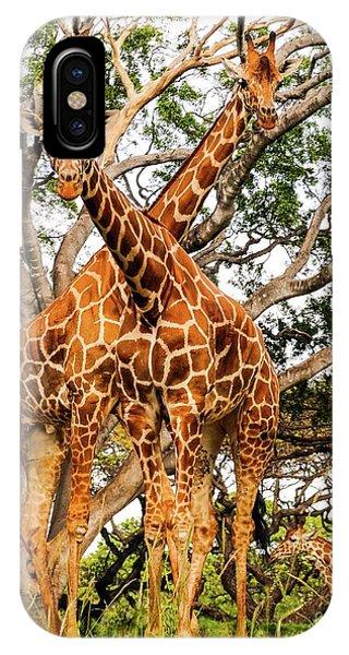 Giraffe's Looking IPhone Case