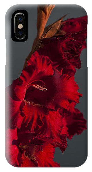 Gladiolus Against A Dark Cloud IPhone Case