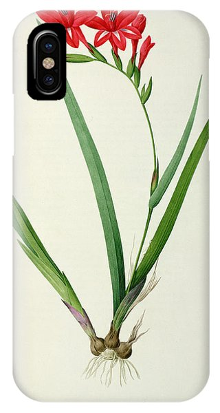 Botanical iPhone Case - Gladiolus Cardinalis by Pierre Joseph Redoute