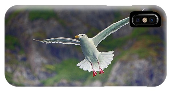 Glaucous-winged Gull IPhone Case