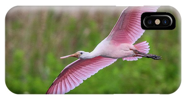 Gliding Spoonbill IPhone Case