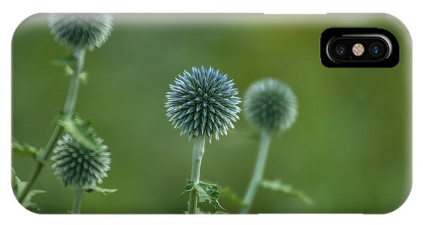 Globe Thistles Echinops IPhone Case