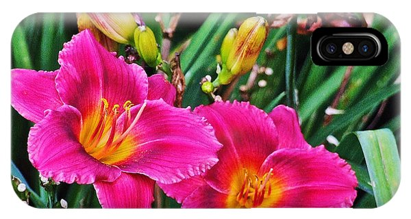 Glorious Daylilies IPhone Case