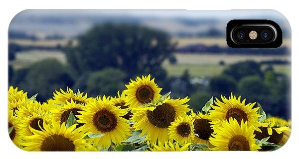 Glorious Sunflowers IPhone Case