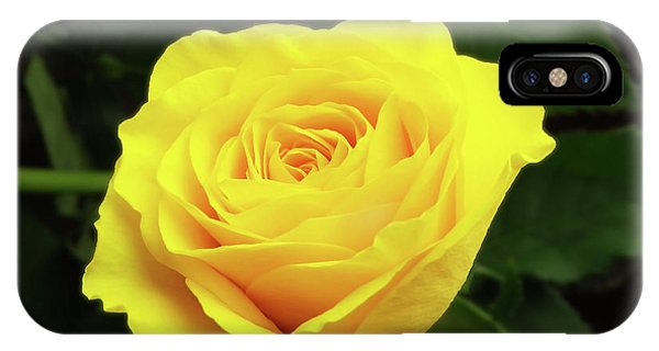 Glorious Yellow Rose IPhone Case