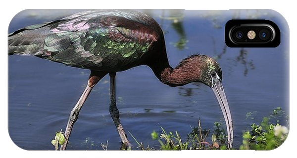 IPhone Case featuring the photograph Glossy Ibis In Pond by Bradford Martin