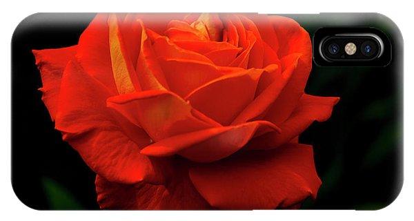 Glowing Orange Rose IPhone Case
