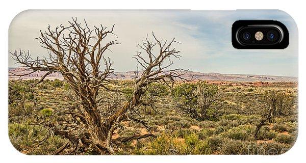 Gnarled Juniper Tree In Arches IPhone Case