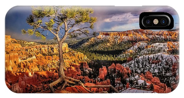 Gnarled Tree At Bryce Canyon IPhone Case