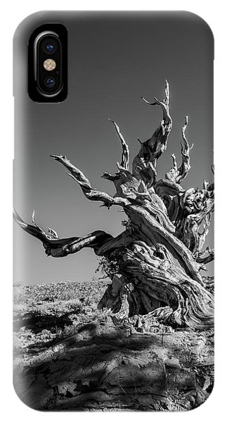 Gnome Tree IPhone Case