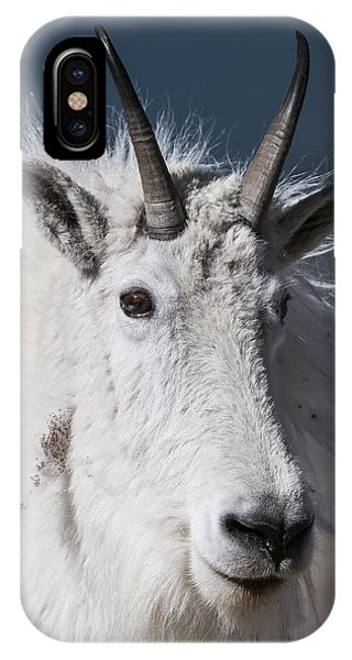 IPhone Case featuring the photograph Goat Portrait by Gary Lengyel
