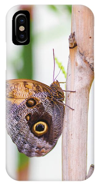 IPhone Case featuring the photograph Gold And Brown Butterfly by Raphael Lopez
