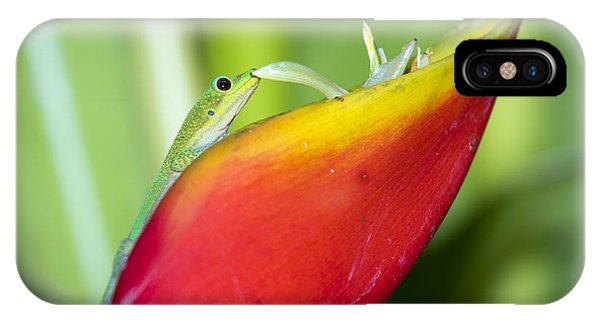 Gold Dust Day Gecko IPhone Case