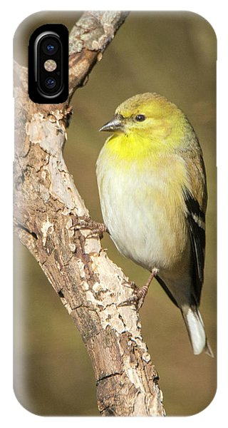 IPhone Case featuring the photograph Gold Finch by David Waldrop