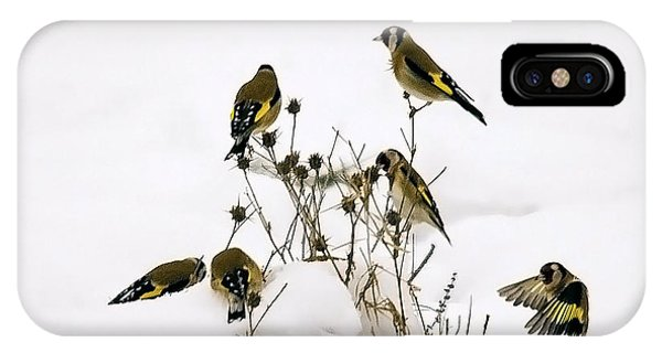Gold Finches In Snow IPhone Case