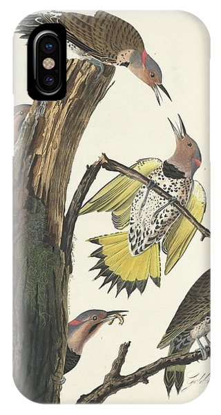 Gold-winged Woodpecker IPhone Case