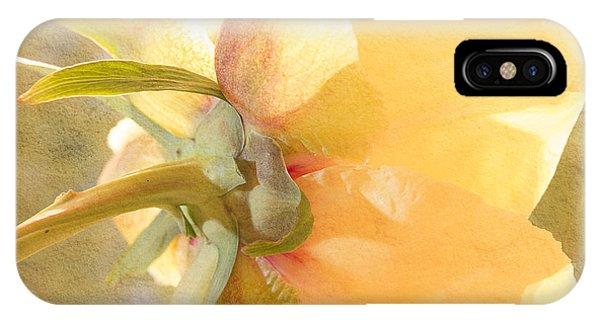 Golden Bowl Tree Peony Bloom - Back IPhone Case