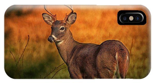 Golden Buck IPhone Case