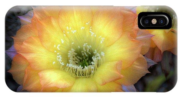 Golden Cactus Bloom IPhone Case