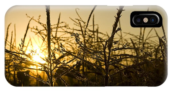 Golden Corn IPhone Case