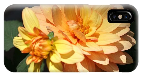 Golden Dahlia With Bud IPhone Case